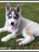 Mylka (2 mois)