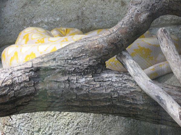 robe;Zoo de Beauval 27 juillet 2009 253
