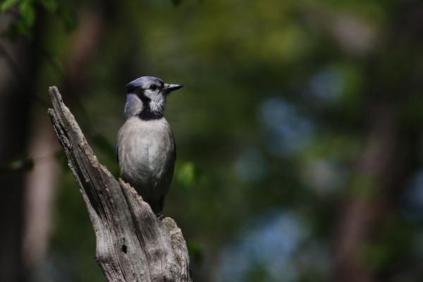 Les plus beaux oiseaux de Central Park