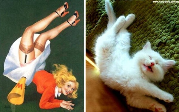 Quand les chats posent comme des pin-up   ...