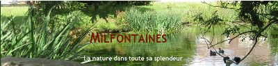 Milfontaines