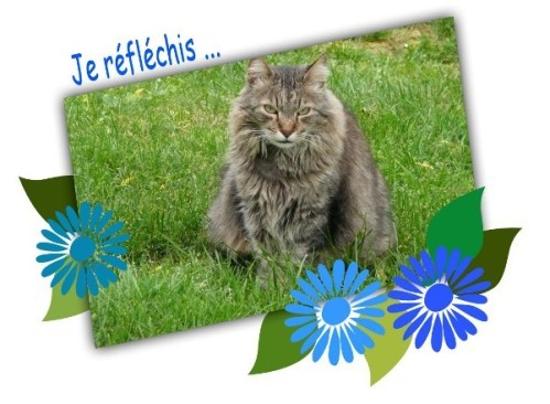 Colibri-fleurs-bleues.jpg