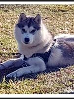 Ourka (10,5 mois)