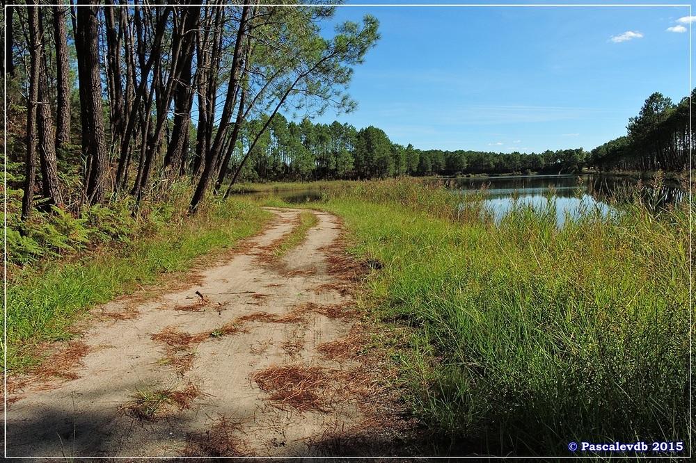 L'étang de Surgenne - Septembre 2015 - 7/10