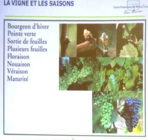 Visite à la Villa Bissinger à Aÿ , en Champagne