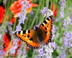 Des papillons et des hommes !