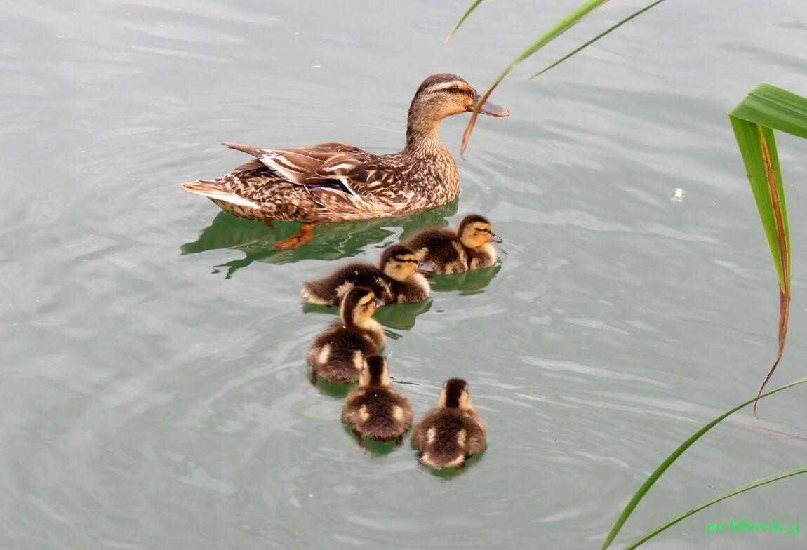 une famille ...