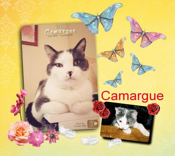 Au revoir Camargue