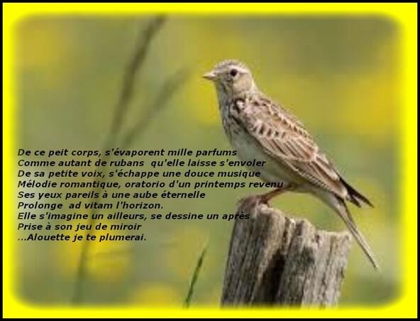 Auteur: Pascal MORAND