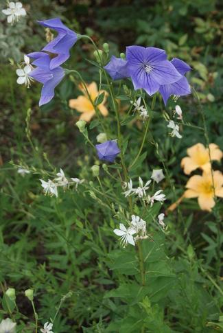 Massif fleuri en juillet.