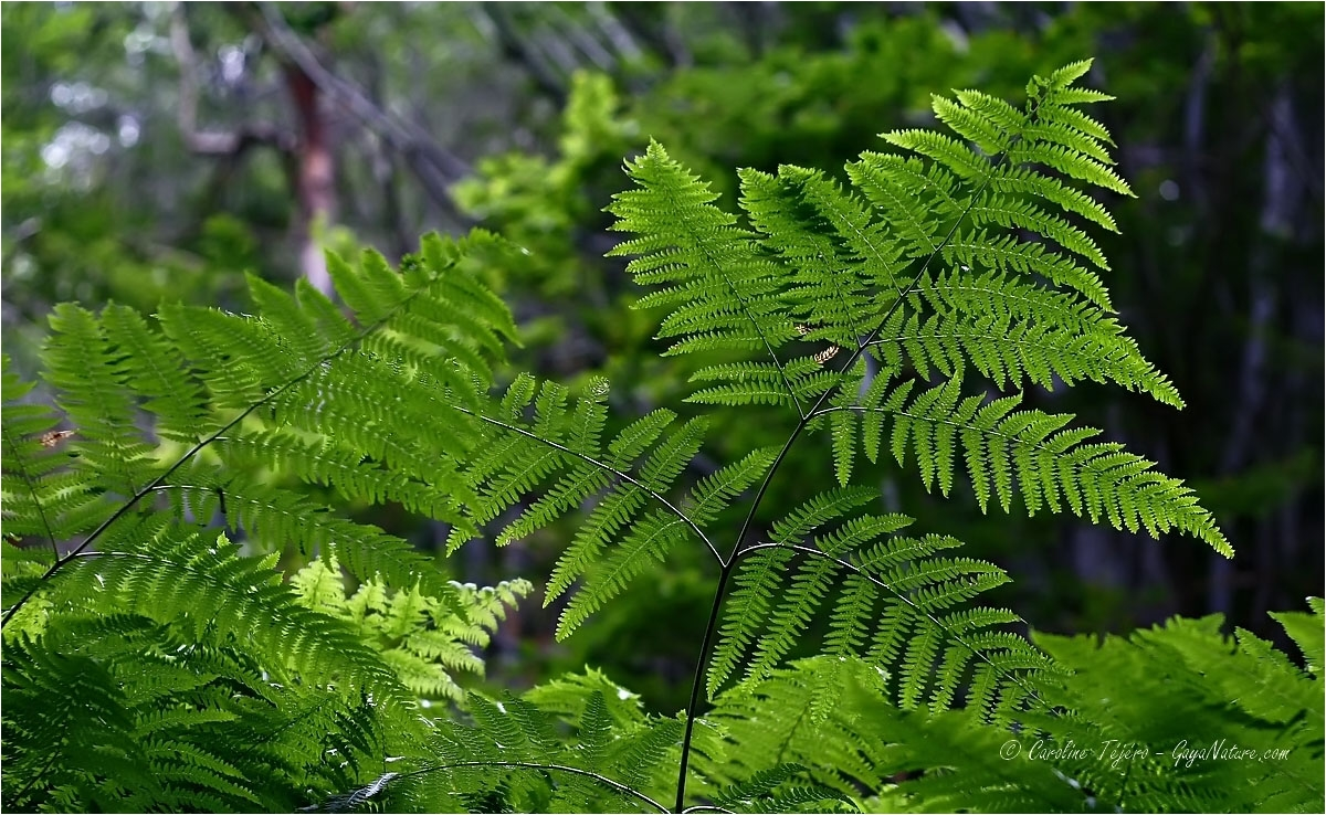 Fraicheur chlorophylle