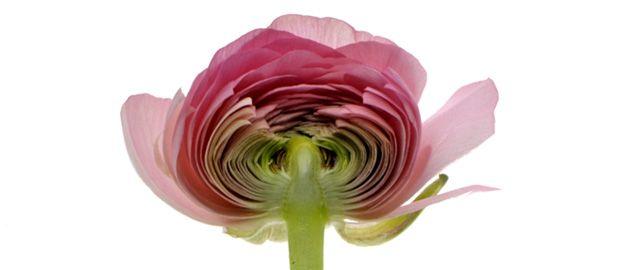 Les fleurs aux racines de la beauté