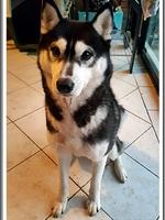 Leïka (2,5 ans)