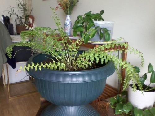 Fertilisant naturel et écologique pour plantes