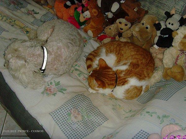 chat-063-13.02.2012.jpg