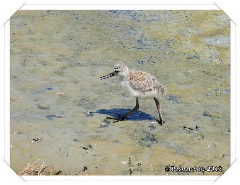 Grands et petits à la réserve ornitho du Teich - 10/15
