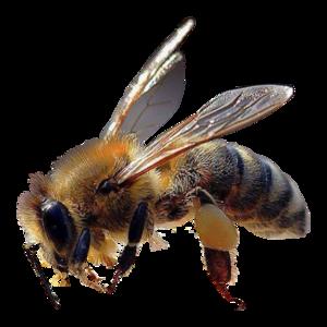 Pollen-Plancton