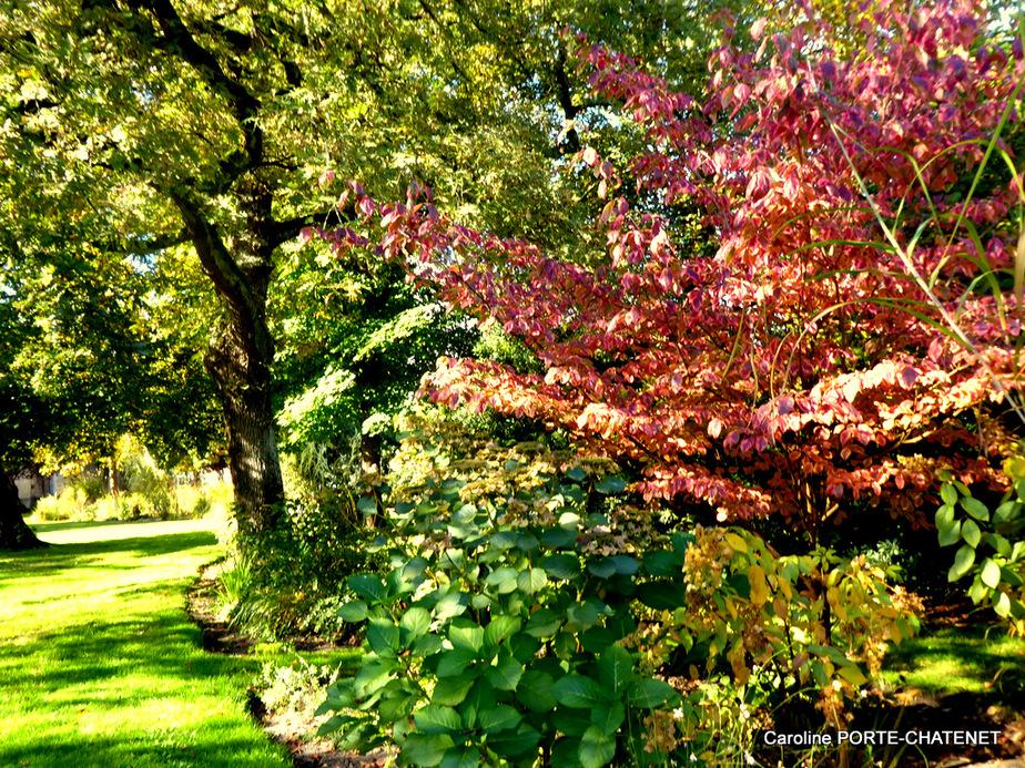 *L'automne au Jardin public de Mimizan*