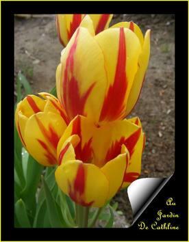 Mes Bulbes de printemps