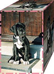 Uchka 01 2004-copie-1