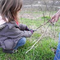 Utilisation du sécateur pour broyer les végétaux de répuration