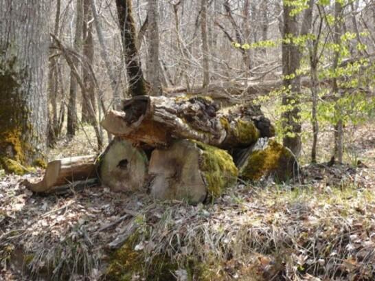 Promenade en forêt 2