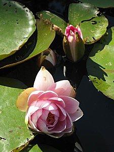 Jardin-du-Prahor-8-08-12-.JPG