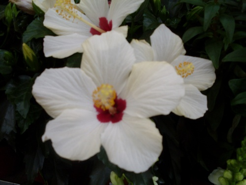 Des fleurs classées X