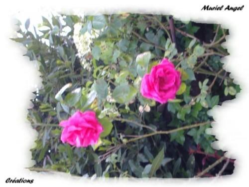 copiry-Muriel-Angel-creat--1-.JPG