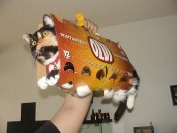 le chat bus