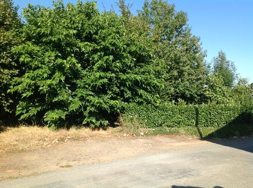 Entrée du terrain Ete 2012... une forêt!!!
