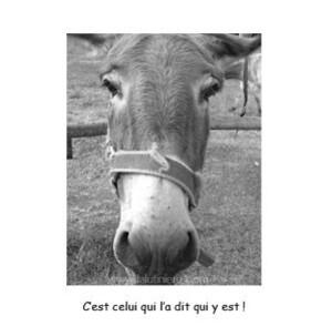 la mule 5 am3-2