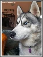 Mylka (2,5 ans)