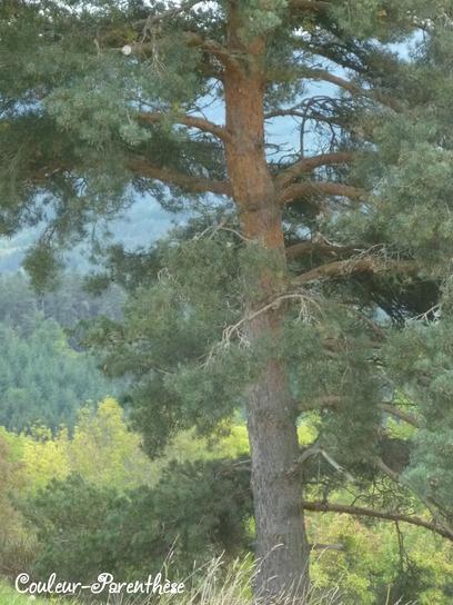 La forêt de Medeyrolles!