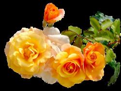 Virágok szépek..