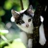 chaton-haut-arbre.jpg
