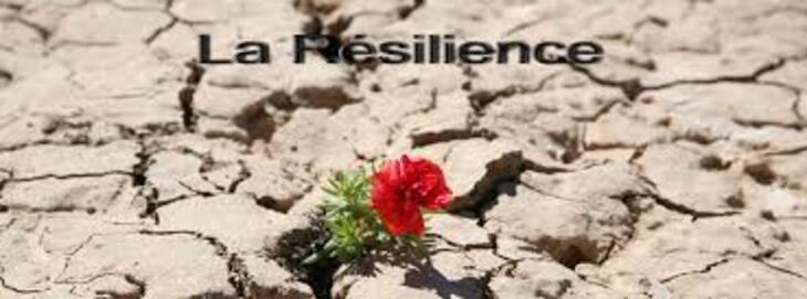 Résultats de recherche d'images pour «résilience»