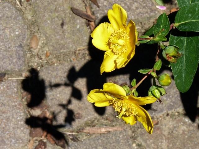 Metz en fleurs 13 mp1357 2011