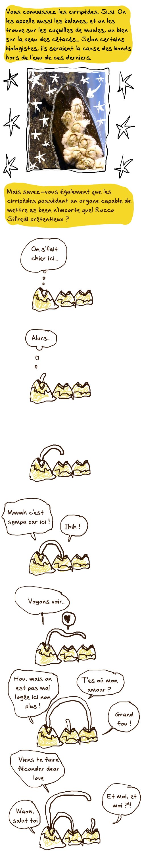Cirripèdes