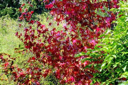 Des feuilles rouges et vertes