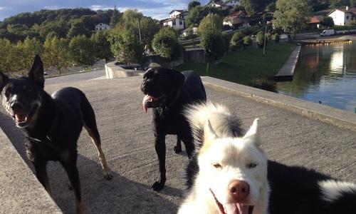 Garde chien