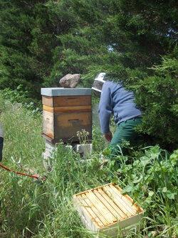 """Miel """"Via mes plantes"""" en photos... et en pots de 500g :)"""