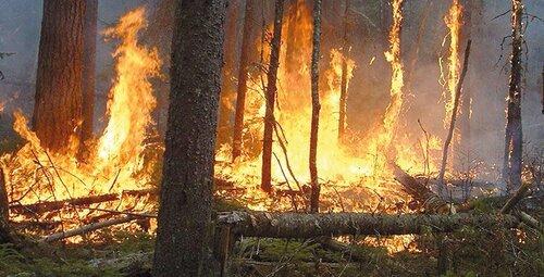 Incendie de forêt : Trente individus devant la justice
