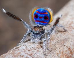 Les araignées, petites bêtes attirantes?