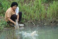 Le klong dans les rizières