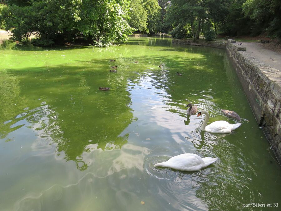 le parc de Kerbihan (56)