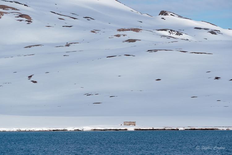 Nordstjernen 19 Mai - des morses à Raudfjorden