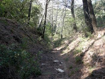 Ce chemin creux nous amène sur le GR
