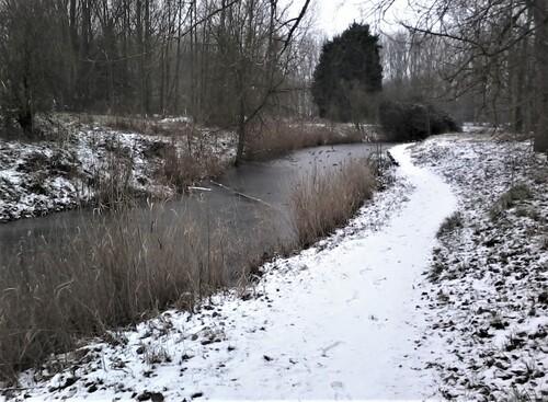 Le bois des forts sous la neige c'est rigolo