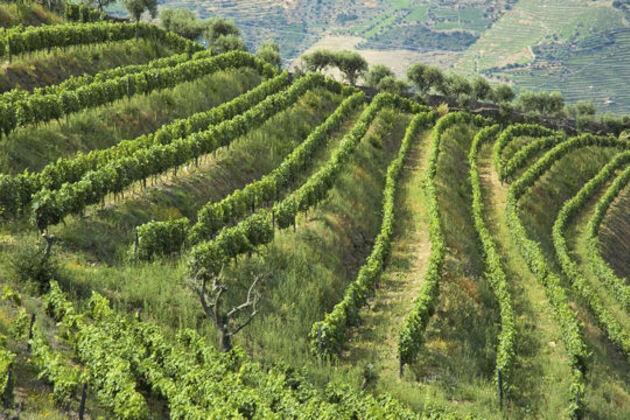 Le Haut-Douro et ses vignes